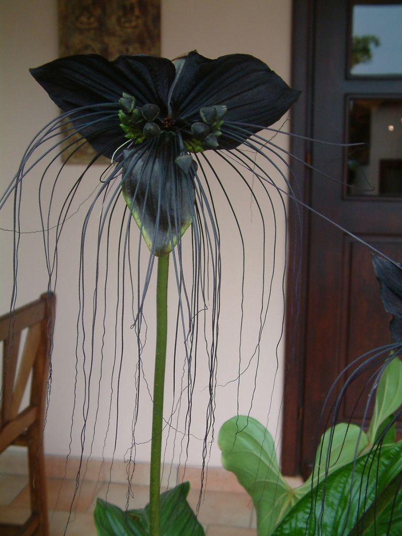Hotel front garden flower 9