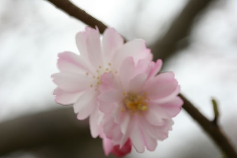 Pictures (Spring 06) 120